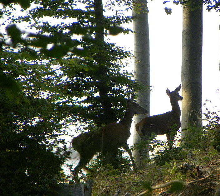 Environs du gite Jardin Joachim - Biches en forêt de saint Gobain